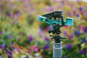 blur-blurred-background-close-up-750830
