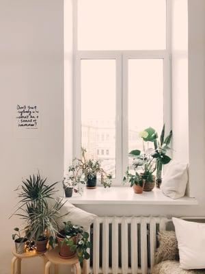 plants on window sill