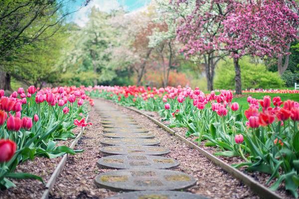 garden-pathway-in-a-backyard-flowers