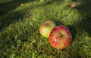 apple-compost-smart-waste-disposal